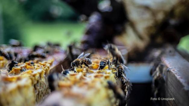 FAO abre inscrições para curso gratuito sobre agroecologia